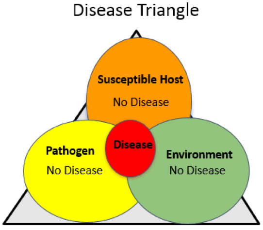 disease triangle